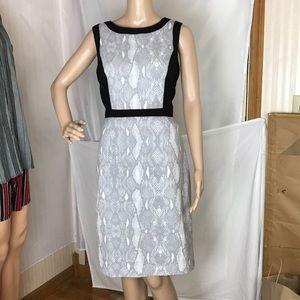 Calvin Klein Dress Gray Black White Size 8